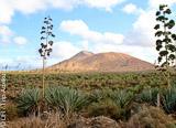 Fuerteventura aux Canaries, île romantique, sportive, découverte, festive et détente! - voyages adékua