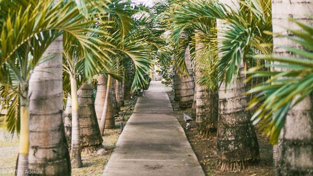 Profitez de la douceur des Antilles entre deux séssions de kitefoil