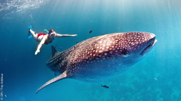Des vacances kitesurf au Mozambique, avec possibilité de plongée et snorkeling magnifiques