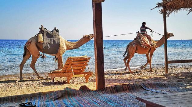 Un séjour entre kite et découverte du Sinaï en Egypte