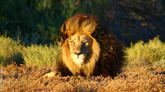 Un safari inoubliable pour voir les Big Five dans la savane africaine, le Swartland et le massif du Cederberg
