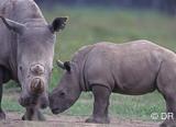 Jours 4 et 5 : safari dans le cratère du Ngorongoro - voyages adékua
