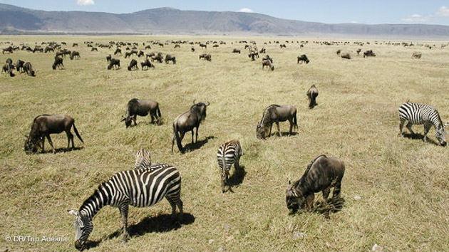 réserve en tanzanie pendant votre séjour kite à zanzibar