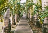 Vos vacances de rêve en Martinique - voyages adékua