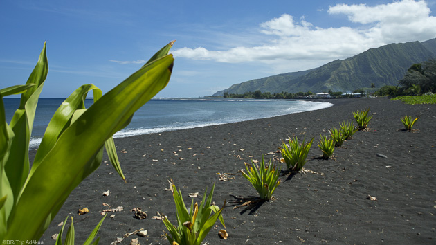 Des vacances paradisiaques à la découverte de la Polynésie en kitesurf
