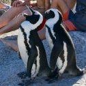 Avis séjour kitesurf en Afrique du Sud