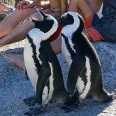 très bon commentaire sur mon Kitesurf Trip à Cape Town